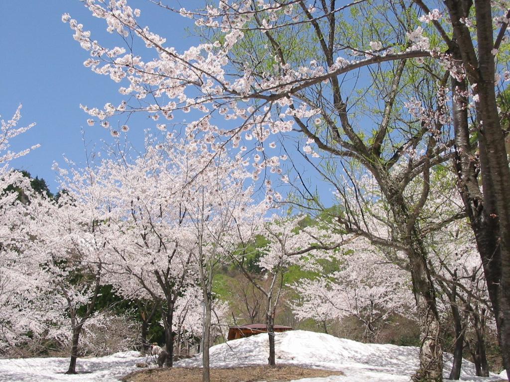 春の訪れ、桜めぐり